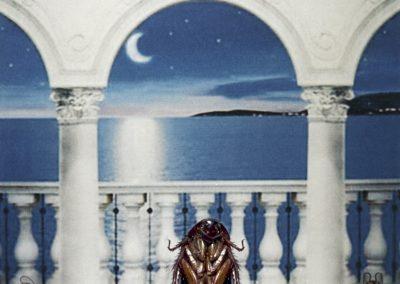 "Alissa Eberle – ""Medit Moon"" color photographic C print"