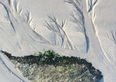 "Alison Hooper – ""Sand Forest""  photograph"