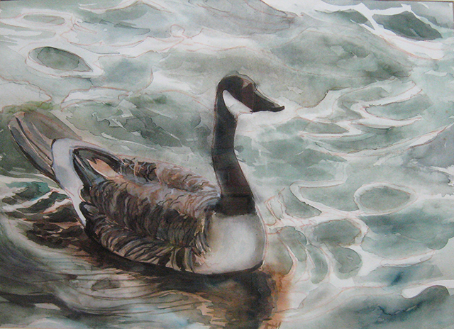 Goose at Best Lake
