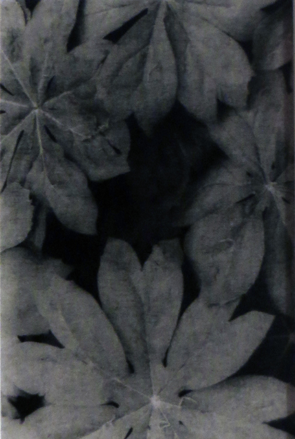 """Baby May Apples"", oxidized gelatin silver print by Patricia A. Bender"