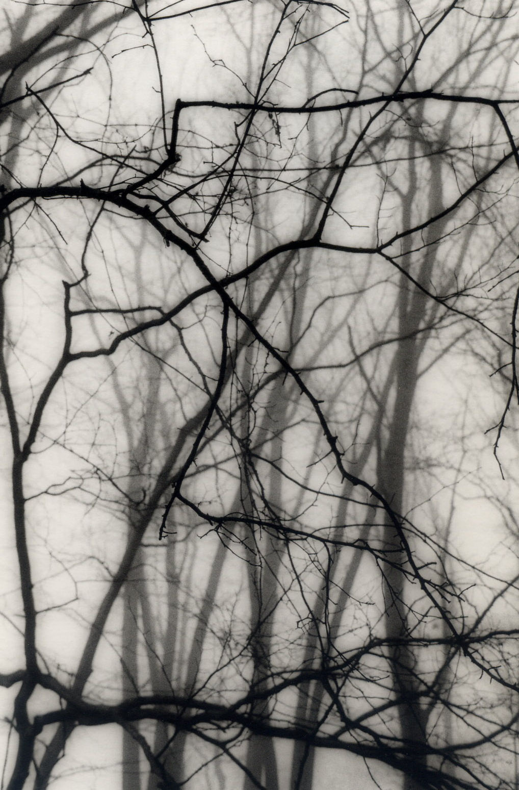 """Backyard, Somerset, NJ"", gelatin silver print by Patricia A. Bender"