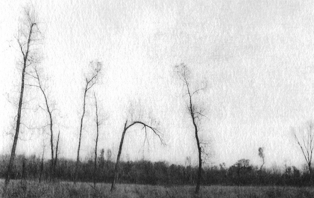 """Central Park, Okemos, Michigan"", oxidized gelatin silver print by Patricia A. Bender"