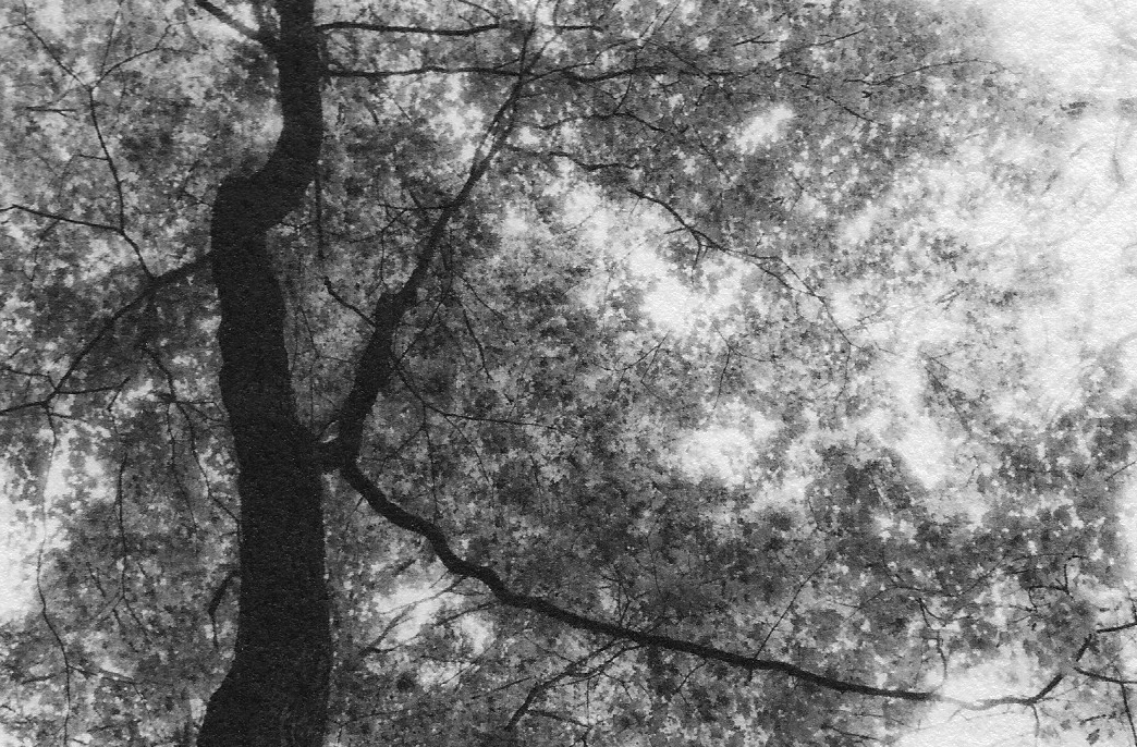 """Sleeping Bear Tree Canopy"", oxidized gelatin silver print by Patricia A. Bender"