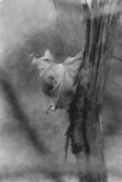 """Abbot Road Park, Michigan"" (1), oxidized gelatin silver print,"