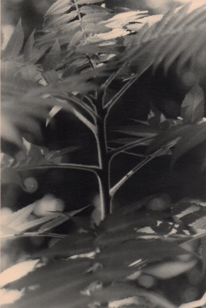 """""""Four Mile Creek (1)"""":, oxidized gelatin silver print"""