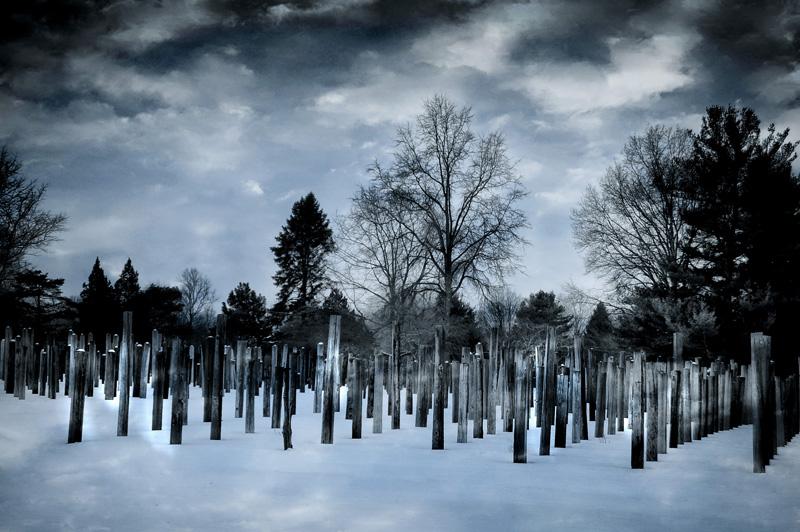 """Heidi Sussman   """"Telephone Pole Park""""  photograph"""