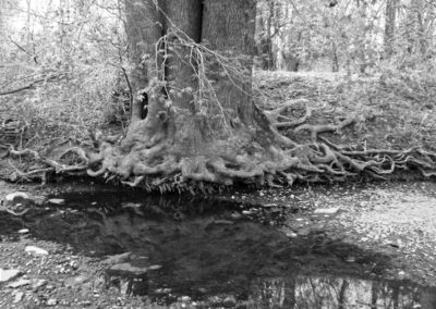 """Bill Bonner """"Exposed Roots (Grayscale)"""""""