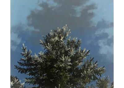 "Daniel Gluibizzi  – ""Blue Spruce 05"""