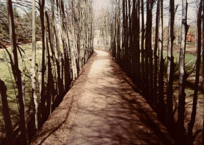 """Michelle Harpster  – """"The Road Diverged in Wood"""""""