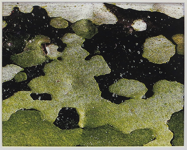 "Bill Bonner ""Sycamore Bark #3"""
