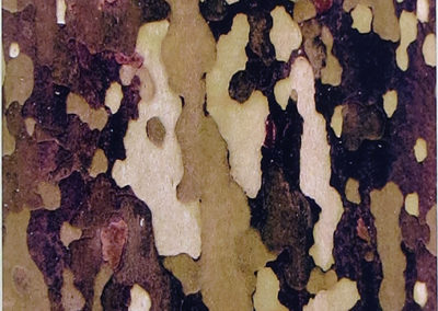 "Bill Bonner  ""Sycamore Bark #4""  digitally enhanced photograph"