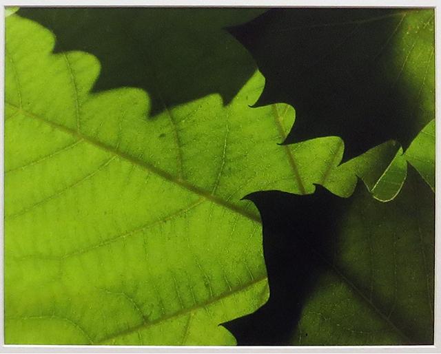 "Bill Bonner ""Sycamore Leaf #2"" digitally enhanced photograph"