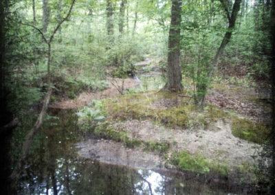"""Stream Near Dallenbach Lake"" by JoAnn Telemdschinow"