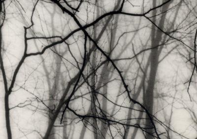 """Backyard, Somerset, NJ"", gelatin silver print by Patricia A. Bender"