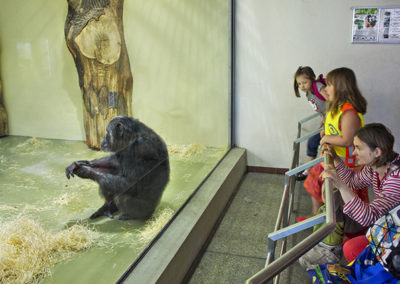 "Melissa Tomich – ""Chimpanzee, Berlin"", 2013"