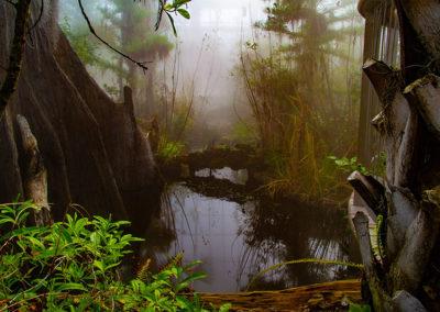 "Tom Maugham   ""Mist""  photograph"