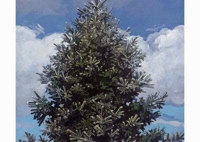 "Daniel Gluibizzi  – ""Blue Spruce 01"""