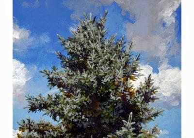 "Daniel Gluibizzi  – ""Blue Spruce 02"""