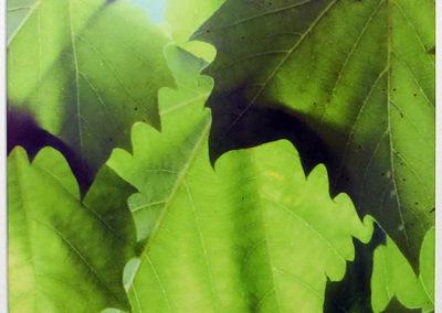 "Bill Bonner ""Sycamore Leaf #1""  digitally enhanced photograph"