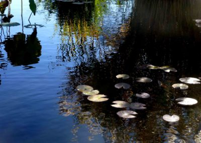 "Irene Riegner ""Lilly Pond"" photograph"