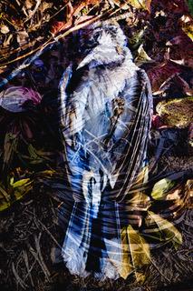 "Larry McCandlish ""Silent Spring Redux""  digital collage, inkjet dye on paper"