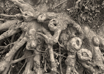 "Bill Bonner ""Roots"" photo print $35.00 SOLD"